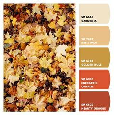 orange burnt reds warm hues leaves autumn fall yellows bieges turn of seasons branding marketing interior exterior desert rustic southwestern style grand canyon sunset colors dining room kitchen den basement patio accent common areas fall wedding Paint colors from #Chip It! by #SherwinWilliams