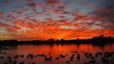 Beautiful sunset over a lake in Lubbock. Photography Tips, Nature Photography, Create Your Own Image, Sunset Images, Weather Underground, The Weather Channel, Landscaping Company, Get Outdoors, Beautiful Sunset