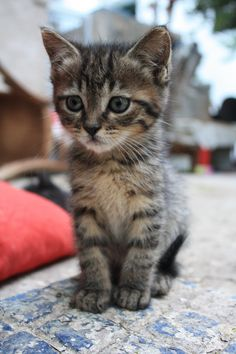 Kittens in Athens, Greece