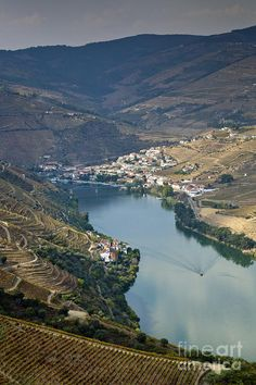 ✮ Douro Vineyard, Portugal