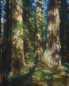 Redwood Groves (from the 1900's) by John Brosio
