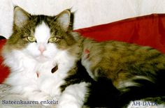 Jasmin Cats, Animals, Gatos, Animales, Animaux, Animal, Cat, Animais, Kitty