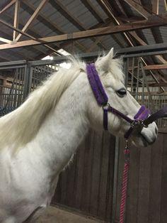"""I am so tired"" the white pony said"