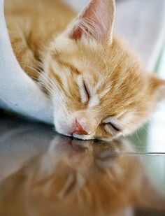Sleepy orange kitten. <3