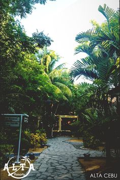 As the branches of trees and plants bend on where the gentle breeze are coming from, come and relax, be one with the nature then relax your mind as you stay here in Alta Cebu. Fresh Green, Cebu, Branches, Oasis, Breeze, Landscapes, Relax, Peace, Garden