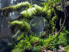 Love how the plants are growing in the moss on top of the branches - like some of trees on Dartmoor (on more tropical). Water Terrarium, Gecko Terrarium, Aquarium Terrarium, Reptile Terrarium, Nature Aquarium, Planted Aquarium, Tropical Terrariums, Aquascaping, Reptile Room