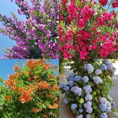 Navezuelas (Cáceres), paraíso de las flores.