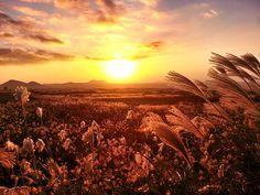 가을 이미지 - Google 검색
