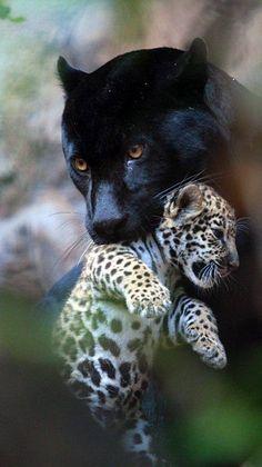 Cute Wild Animals, Cute Little Animals, Cute Funny Animals, Cute Cats, Pretty Cats, Beautiful Cats, Animals Beautiful, Nature Animals, Animals And Pets