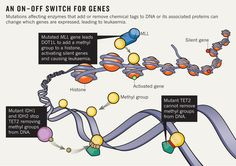 Enzymes that modify gene expression without changing the DNA sequence are now viewed as central to the development of leukaemia — and may lead to new drugs.