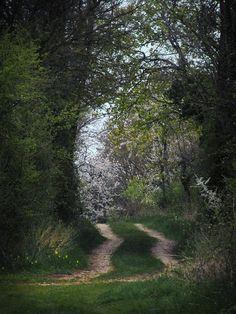 image gratuite d'un chemin sous les arbres au printemps