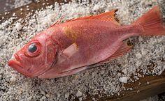 Pescados de verão no menu do Rubaiyat Rio - http://superchefs.com.br/pescados-de-verao-no-menu-do-rubaiyat/ - #Noticias, #Peixes, #Pescados, #RioDeJaneiro