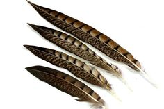 4 Size Lady Amherst Pheasant Feathers. (5) Banded Fancy Pheasant Tail Quills for Making Dream Catchers. Short Brown Lined Feathers for Hats Pheasant Feathers, Bird Feathers, Making Dream Catchers, Brown Line, Peacock Bird, Stone Pendants, Etsy Handmade, Beautiful Necklaces, Quilling