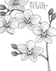 moth orchid coloring pages - photo#16