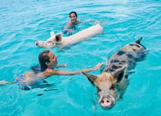 Pig Beach: an Island run by Swimming Pigs in the Bahamas - When On Earth - Places to See, Things to Do, Gear to Get