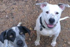 Diesel and her friend Zoe....waiting for a treat!