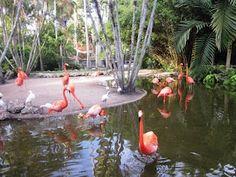 Robert's Tropical Paradise Garden