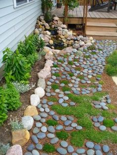Pathway made of river rocks and Irish moss, to resemble a dry creek bed.
