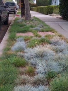 Lawn Reform Coalition Resources - Love this beautiful substitute for lawn grass.
