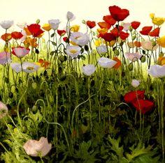Garden Party -Recent Work Shirley Novak
