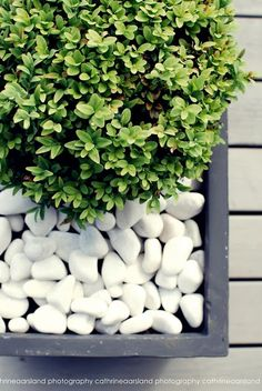 Galet décoratif blanc: plus de 45 idées pour vous inspirer!