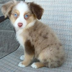 In love with this puppy! Not sure what kind...?