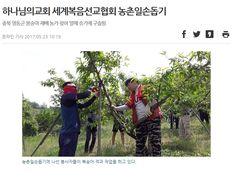 복숭아 농가 찾아 열매솎기'구슬땀'흘린 대전 하나님의교회(안상홍증인회)