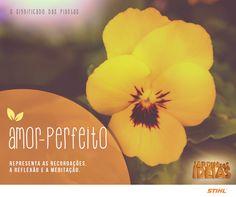 Fácil de cultivar e muito colorido! Além dessas ótimas características, o Amor Perfeito ainda tem significados legais.