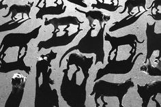 Surreal cat shadow play by Alexey Bednij Shadow Photography, Art Photography, Silhouette Photography, Pattern Photography, Illusion Photography, Shadow Photos, Shadow Portraits, Shadow Images, Surreal Photos