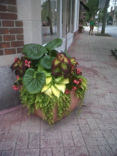 Part Shade container, Greenwich, CT