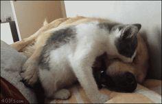 Dog Sleeping GIF