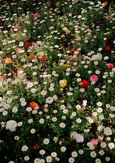 I could flop in this field of flowers