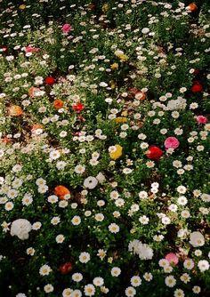 Campo de flores maravilhoso