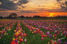 A sea of colour.....
