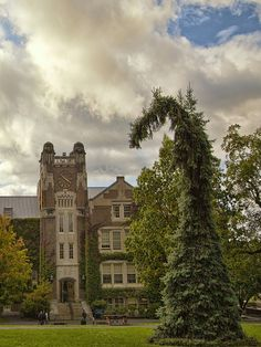 Dr. Seuss tree and Sturges Hall on a stormy sky day  SUNY Geneseo  Geneseo, NY