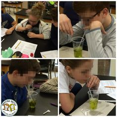 Cellular respiration and photosynthesis comparison lab - btb solution. Plus more ideas for teaching cellular processes.