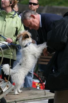 Doc Martin | Martin Clunes chatting to Dodger. Dodger is my favourite Doc Martin character - such a good actor!