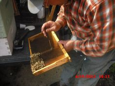 This is how I transferred the larvae to their new location. The punch is heated in hot water so that it melts through the large frame, which contains larvae 12-24 hours post-hatching: REALLY tiny things, like you can see in one of the other pics in this album. I carefully remove the cell...
