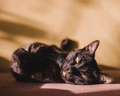 Когда не знаешь, что запостить, выкладывай домашних питомцев😺 ⠀ Лиза красотка, так что кучу 🖤 она соберёт, правда же?😈 ⠀ #novokuznetsk #agameoftones #500px #pet #cat #black #summer #aov #artofvisuals #beautiful #adobe Instagram Accounts, Cats, Animals, Beautiful, Gatos, Animales, Animaux, Kitty, Cat