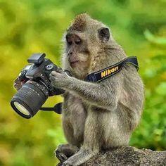 Comedy Wildlife Photo