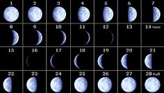 Phases of the moon as seen in the Southern Hemisphere. Gives a brief outline of the view of the moon phases from both the northern and Southern Hemispheres. Moon Orbit, Lunar Phase, Earth From Space, Beautiful Moon, Nature Journal, Moon Phases, Stars And Moon, Astronomy, Science Fun