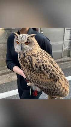 Owl Photos, Owl Pictures, Cute Little Animals, Cute Funny Animals, Beautiful Owl, Animals Beautiful, Animals And Pets, Baby Animals, Cute Animal Videos