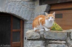 El gato que protege el pueblo de Senegüe, Aragón.