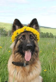 Adorable Dog With Flower Wreath ♥