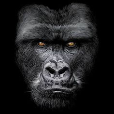 Majestic Gorilla Face on UNISEX Black T Shirt