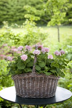 "Bring in a wicker basket (preferably at least 12"" round) and convert a hanging basket to a Mother's Day Planter"
