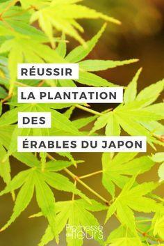 #erabledujapon #conseiljardin #jardinage