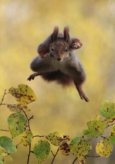 comedy-wildlife-photo-2015-droles-animaux-sauvages-12