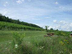 Bully Hill Vineyards, Keuka Lake on Under the Oaks blog: Dreaming of... Upstate New York