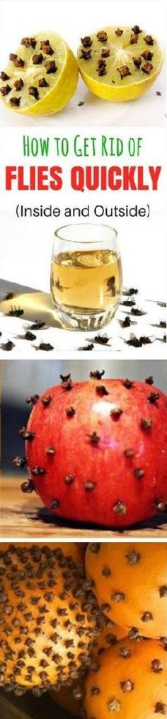Get rid of wasps, flies and bees! Just cut a 2 liter ...
